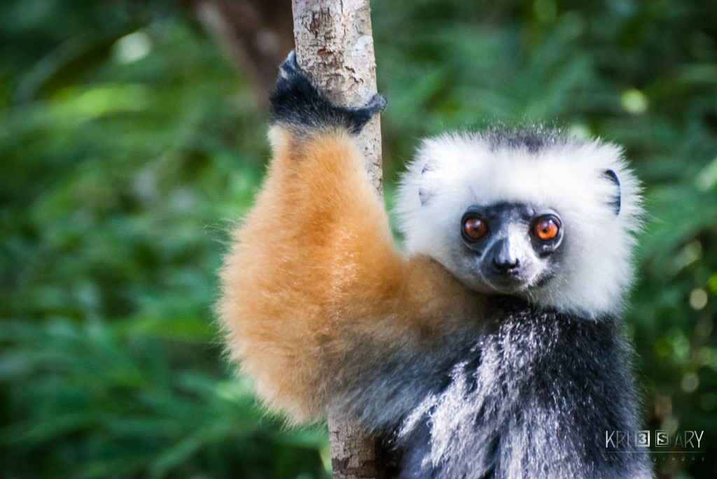 Find An Organization To Support Lemur Conservation Network