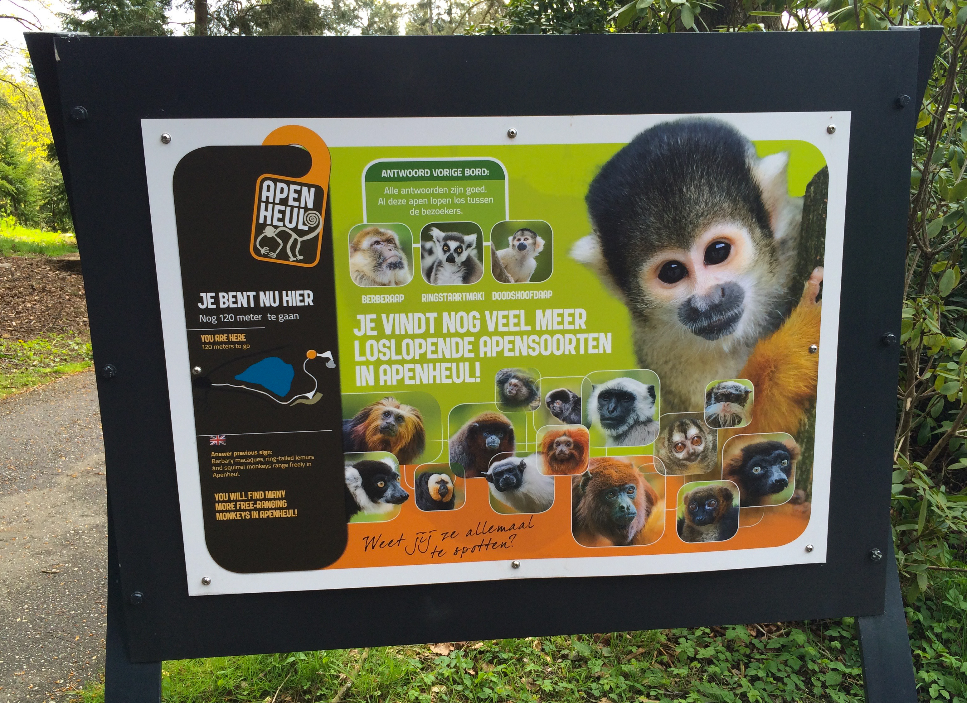 A Visit to the Apenheul Primate Park in the Netherlands – Lemur  Conservation Network