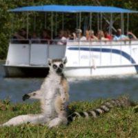 Lemur island at Naples Zoo.