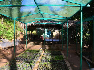 Nursery in Kianjavato