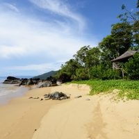 An image of a palm thatched tree-house at the Masoala Forest Lodge overlooking the stunning beach.