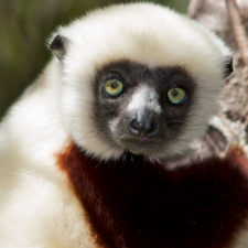 LCN Member of the Month: Planet Madagascar