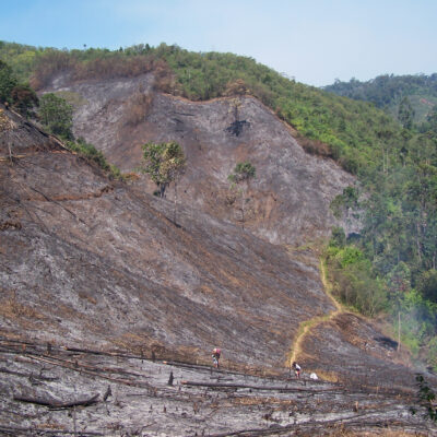 Slash-and-burn agriculture remains one of the biggest threats to lemurs and their habitat in the Andasibe region.