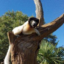 Tales of a lemurs apprentice #2