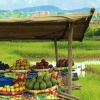 Summer fruit stall in Antananarivo. Credit: Domoina R.