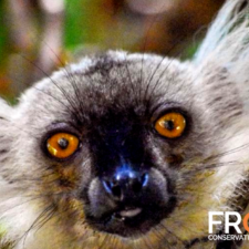 About Frontier's Research Programme in Madagascar