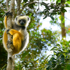 Empower the People to Empower the Lemurs: Talent is Global & Opportunity is Not