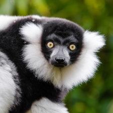 Tales of a Lemur's Apprentice #3