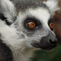 animal-animal-photography-close-up-69954