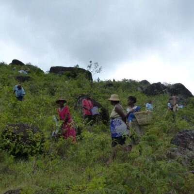 Community members and Gendarmes planting trees in Anka reforestation area