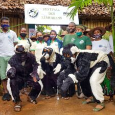 Lemurs Celebrated Worldwide for the 2020 World Lemur Festival