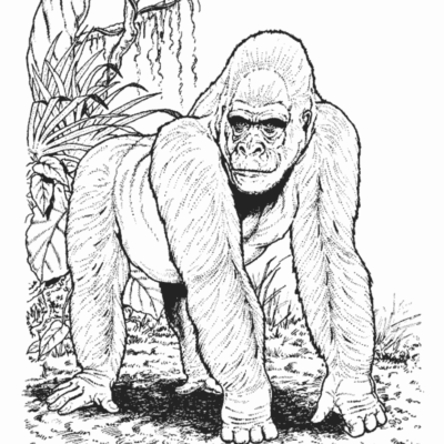 IPPL gorilla coloring sheet