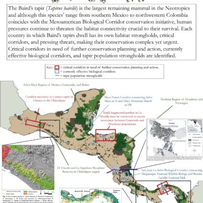 Infographics like this could be shared for World Tapir Day on April 27 to demonstrate the threats facing Baird's tapirs and critical corridors in their current habitats. Figures obtained from Cove et al. (2014), de la Torre et al. (2018), Meyer et al. (2020), and Schank et al. (2020).
