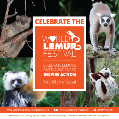 Cute photos are a great way to draw attention to your post. A graphic like this is easily shareable and communicates the key message about World Lemur Day quickly.