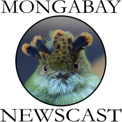 MONGABAY-logo-newscast_1800-600x600